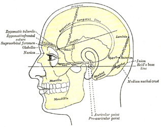 6060919 further The Skull in addition 8688881 likewise Body Cavities together with 3538682. on orbital cavity organs