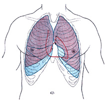 Anterior view of the thorax, showing surface relations of bones, lungs (purple), pleura (blue), and heart (red outline). P. Pulmonary valve. A. Aortic valve. B. Bicuspid valve. T. Tricuspid valve (www.bartleby.com)