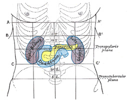 Thoracic cavity as well Lecture 1 Part 2 Introduction To Anatomical Directions And Orientation likewise The Integumentary System further 2053041 additionally Anatomical position. on vertebral body regions cavities