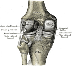 Iii syndesmology 7b the knee joint gray henry 1918 anatomy of 348 left knee joint from behind showing interior ligaments see enlarged image ccuart Gallery