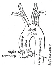 vascular surgery lower extremity artery diagram innominate artery diagram