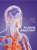 Human Anatomy (9th Edition) - 9th Edition - by Martini - ISBN 9780134424873